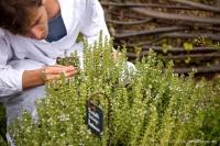 A la découverte des plantes du bien être