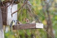 Fabrication de mangeoire à oiseaux